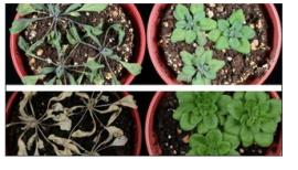 plants_mason