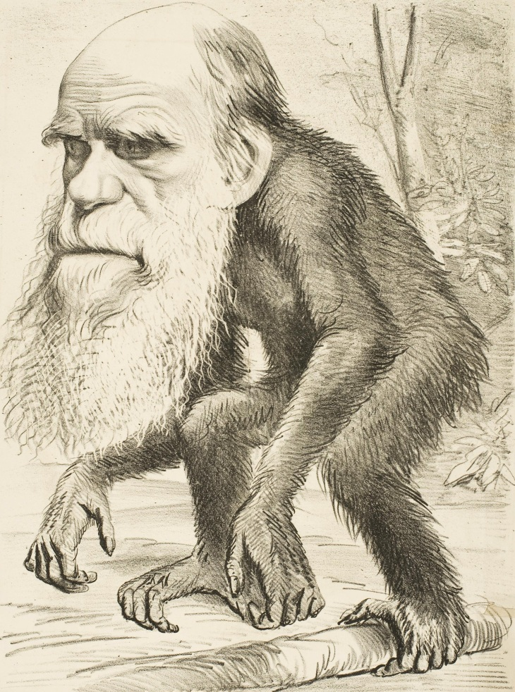 """A Venerable Orang-outang,"" a carciature of Charles Darwin as an ape, as publiched in the March 22, 1871 edition of the satirical magazine ""The Hornet."" (Unknown Artist of The Hornet / Wikimedia, courtesy of  University College London Digital Collections (18886))"
