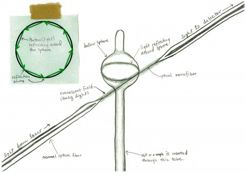 A drawing of the experiment set-up (Vanessa Schipani / OIST)